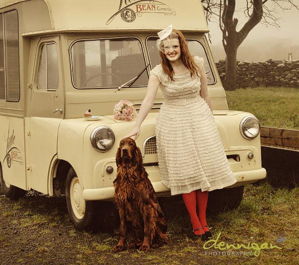 Irish Red Setter Dog